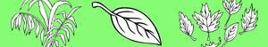 Pintar Plantes i Fulles